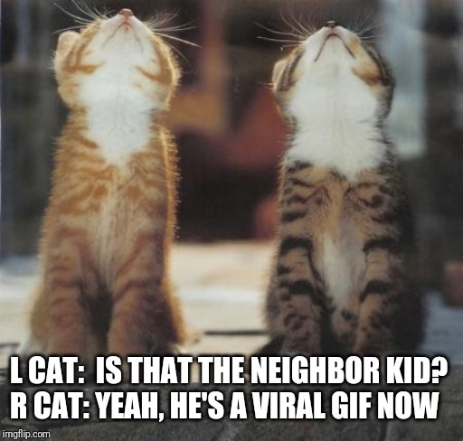 L CAT:  IS THAT THE NEIGHBOR KID? R CAT: YEAH, HE'S A VIRAL GIF NOW | image tagged in cats looking up | made w/ Imgflip meme maker
