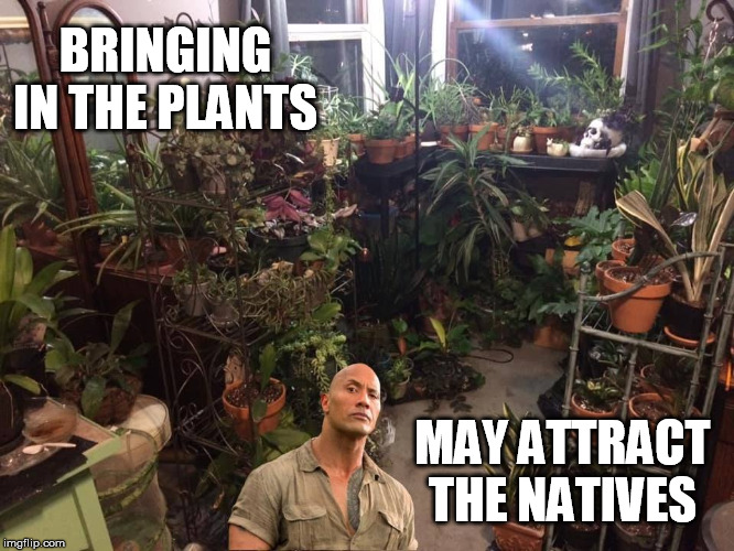 Plants and Rock | BRINGING IN THE PLANTS MAY ATTRACT THE NATIVES | image tagged in funny,the rock,plants | made w/ Imgflip meme maker