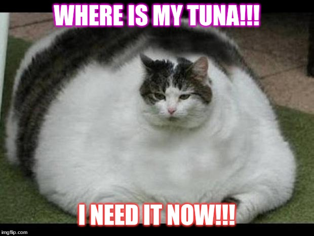 my tuna |  WHERE IS MY TUNA!!! I NEED IT NOW!!! | image tagged in fat cat 2 | made w/ Imgflip meme maker