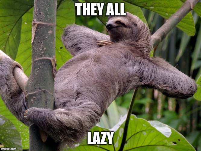 Lazy Sloth | THEY ALL LAZY | image tagged in lazy sloth | made w/ Imgflip meme maker