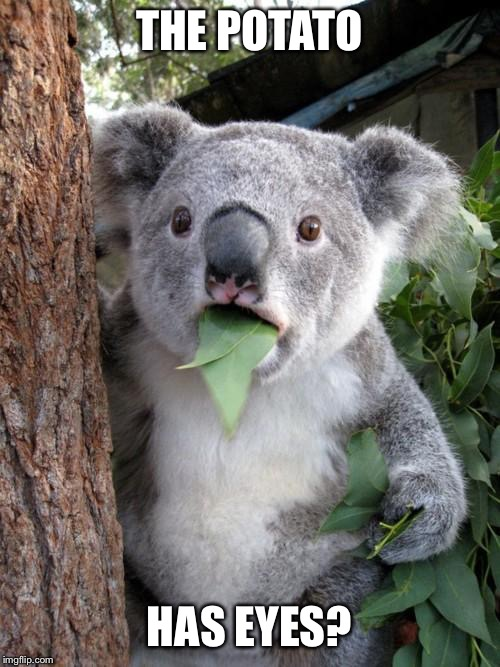 Surprised Koala Meme | THE POTATO HAS EYES? | image tagged in memes,surprised koala | made w/ Imgflip meme maker