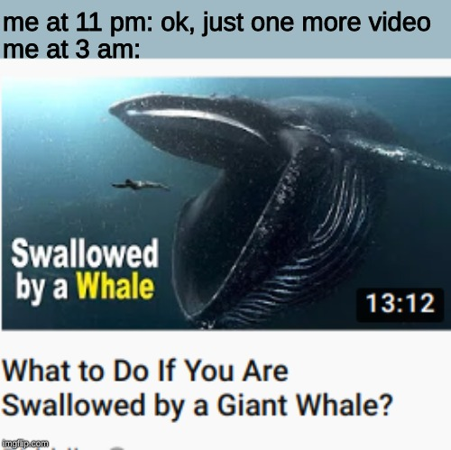me at 11 pm: ok, just one more video; me at 3 am: | image tagged in memes,whale,weird | made w/ Imgflip meme maker
