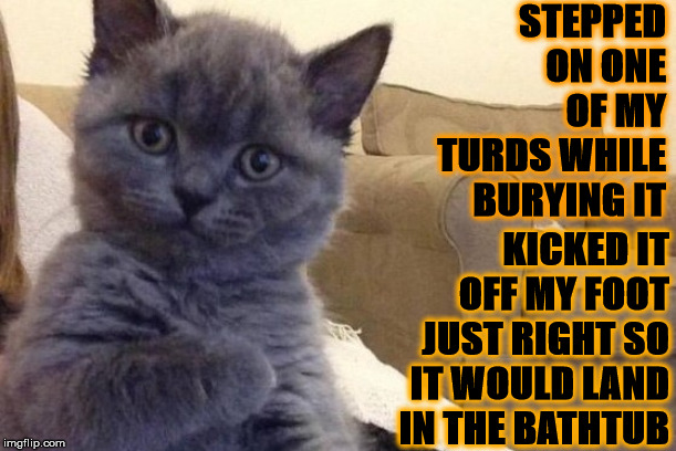 STEPPED ON ONE OF MY TURDS WHILE BURYING IT KICKED IT OFF MY FOOT JUST RIGHT SO IT WOULD LAND IN THE BATHTUB | image tagged in success cat | made w/ Imgflip meme maker