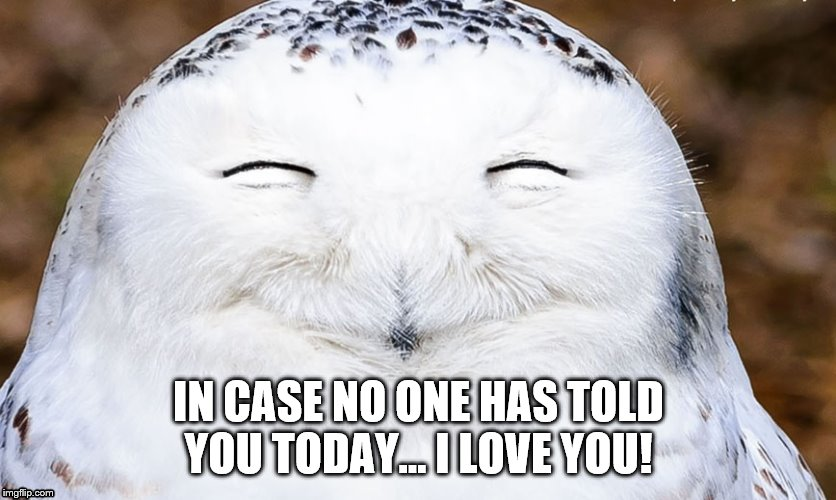 IN CASE NO ONE HAS TOLD YOU TODAY... I LOVE YOU! | image tagged in laughing owl | made w/ Imgflip meme maker