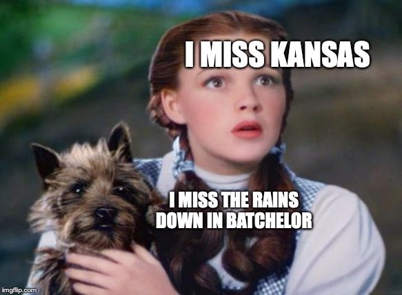 I MISS KANSAS I MISS THE RAINS DOWN IN BATCHELOR | image tagged in toto wizard of oz | made w/ Imgflip meme maker