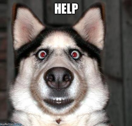 Scared Dog | HELP | image tagged in scared dog | made w/ Imgflip meme maker