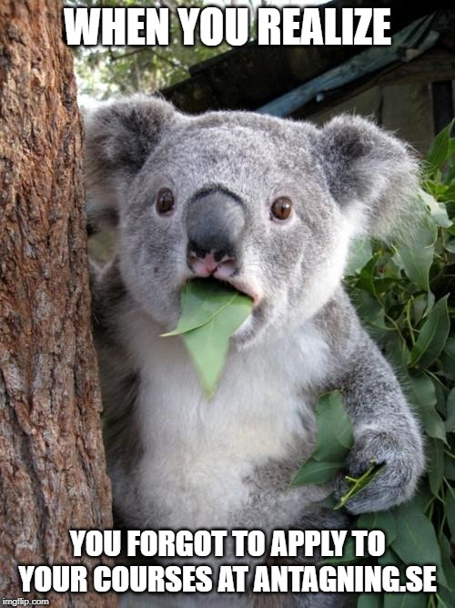 Surprised Koala |  WHEN YOU REALIZE; YOU FORGOT TO APPLY TO YOUR COURSES AT ANTAGNING.SE | image tagged in memes,surprised koala | made w/ Imgflip meme maker