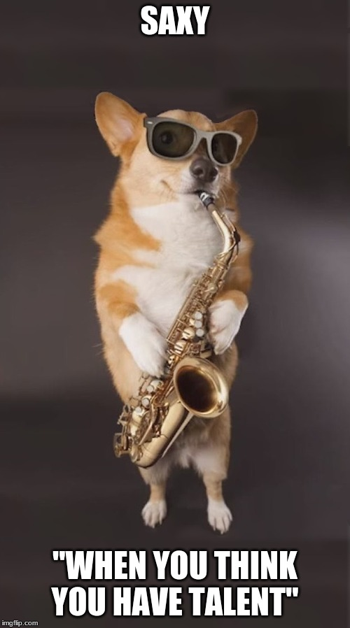 "Corgi Saxophone | SAXY ""WHEN YOU THINK YOU HAVE TALENT"" 