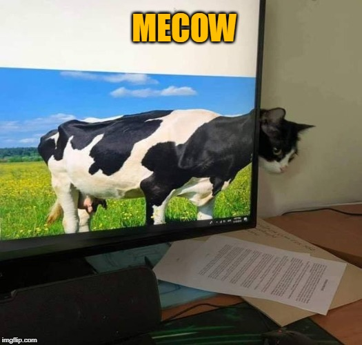 MECOW | MECOW | image tagged in memes,cats,cows,computers,cat,cow | made w/ Imgflip meme maker