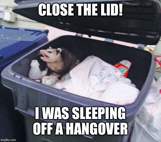 Trash Possum | CLOSE THE LID! I WAS SLEEPING OFF A HANGOVER | image tagged in trash possum | made w/ Imgflip meme maker