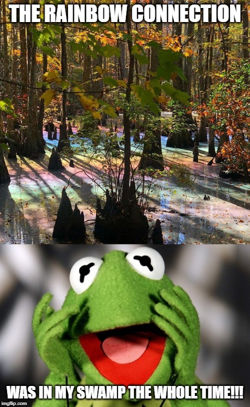 Sometimes you don't need to look far for what you're looking for. |  THE RAINBOW CONNECTION; WAS IN MY SWAMP THE WHOLE TIME!!! | image tagged in memes,funny,rainbow,connection,muppets,kermit | made w/ Imgflip meme maker