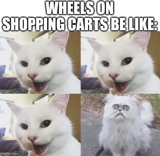 That one wheel on shopping carts | WHEELS ON SHOPPING CARTS BE LIKE: | image tagged in shopping cart cats,memes,cat,shopping cart,relatable,funny | made w/ Imgflip meme maker