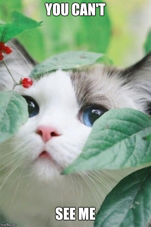 KITTY IN THE BUSH | YOU CAN'T SEE ME | image tagged in cats,cute cat | made w/ Imgflip meme maker