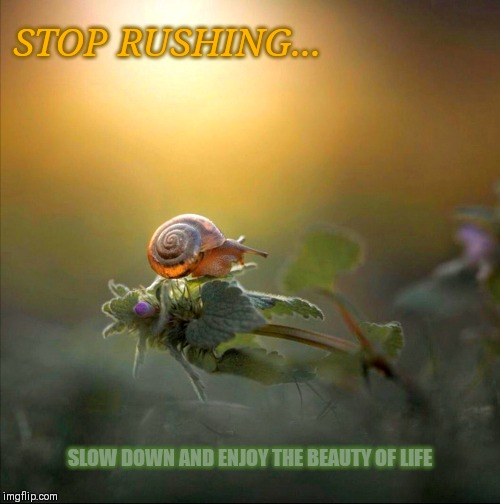 STOP RUSHING... SLOW DOWN AND ENJOY THE BEAUTY OF LIFE | image tagged in slow,life quotes,inspirational quote | made w/ Imgflip meme maker