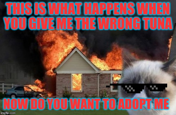 Adopt me | THIS IS WHAT HAPPENS WHEN YOU GIVE ME THE WRONG TUNA NOW DO YOU WANT TO ADOPT ME | image tagged in memes,burn kitty,grumpy cat | made w/ Imgflip meme maker