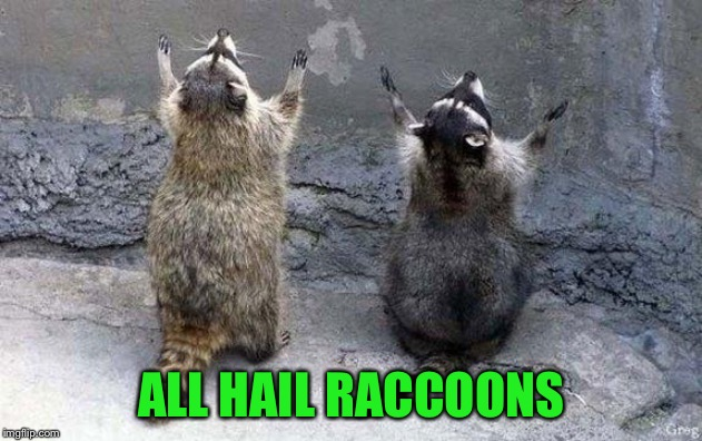 Raccoon Worshipping | ALL HAIL RACCOONS | image tagged in raccoon worshipping | made w/ Imgflip meme maker