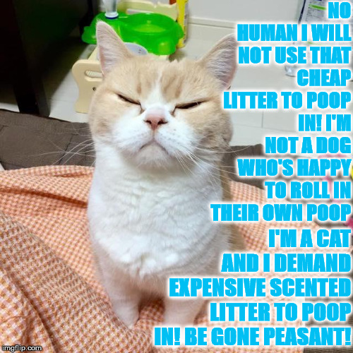 NO HUMAN I WILL NOT USE THAT CHEAP LITTER TO POOP IN! I'M NOT A DOG WHO'S HAPPY TO ROLL IN THEIR OWN POOP I'M A CAT AND I DEMAND EXPENSIVE S | image tagged in i'm a cat | made w/ Imgflip meme maker
