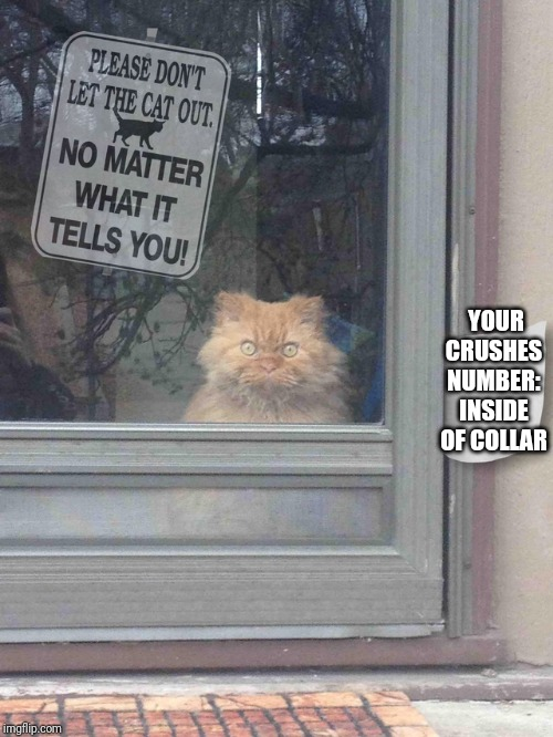 Image tagged in cat no matter - Imgflip