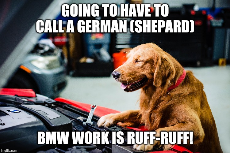 BMW Dog | GOING TO HAVE TO CALL A GERMAN (SHEPARD) BMW WORK IS RUFF-RUFF! | image tagged in funny,bmw,golden retriever,dog,german shepherd | made w/ Imgflip meme maker