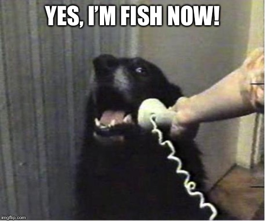 Yes this is dog | YES, I'M FISH NOW! | image tagged in yes this is dog | made w/ Imgflip meme maker