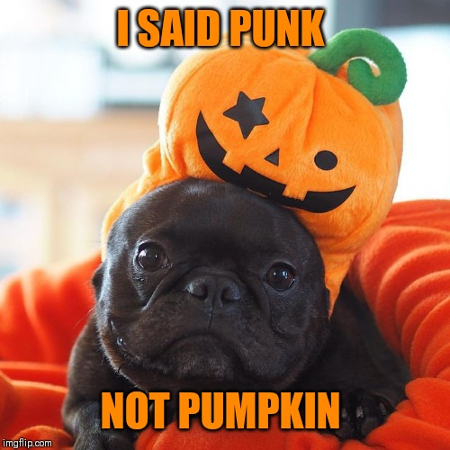 Hey, ho, let's not go! | I SAID PUNK NOT PUMPKIN | image tagged in lost in translation,pumpkin,punk rock | made w/ Imgflip meme maker