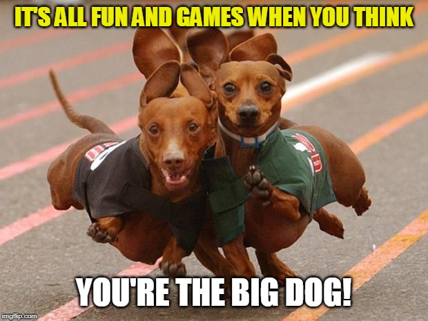 The Big Dog! | IT'S ALL FUN AND GAMES WHEN YOU THINK YOU'RE THE BIG DOG! | image tagged in dachshunds running,funny memes,funny dog memes,dachshunds,big dog | made w/ Imgflip meme maker