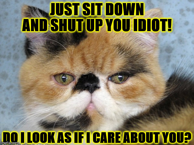 SHUT UP | JUST SIT DOWN AND SHUT UP YOU IDIOT! DO I LOOK AS IF I CARE ABOUT YOU? | image tagged in shut up | made w/ Imgflip meme maker