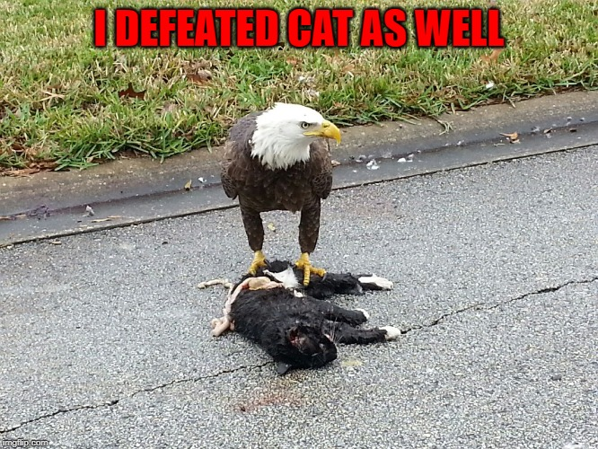 I DEFEATED CAT AS WELL | made w/ Imgflip meme maker