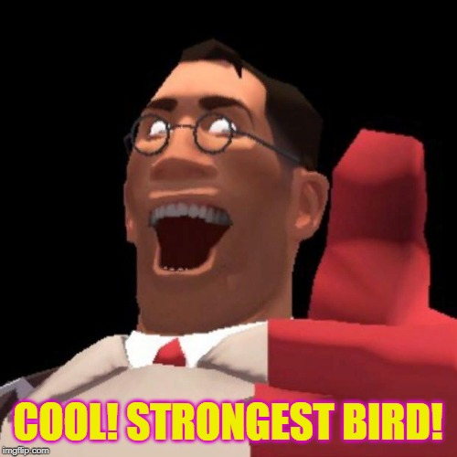 TF2 Medic | COOL! STRONGEST BIRD! | image tagged in tf2 medic | made w/ Imgflip meme maker