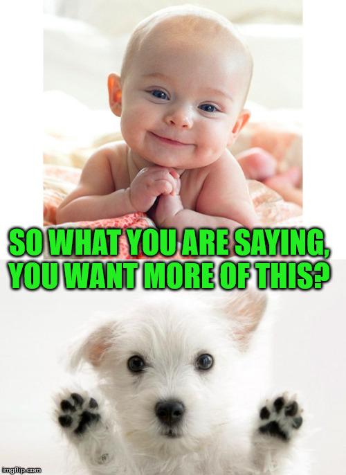 SO WHAT YOU ARE SAYING, YOU WANT MORE OF THIS? | image tagged in cute dog,cute baby | made w/ Imgflip meme maker