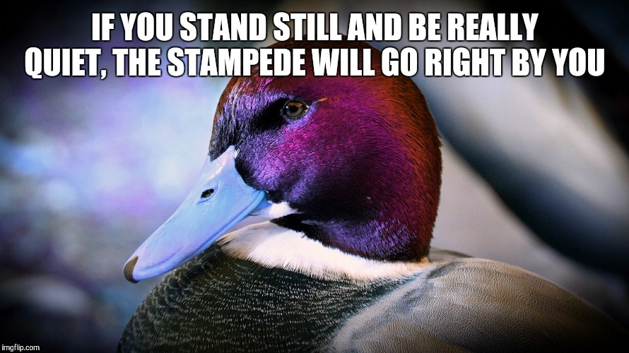 IF YOU STAND STILL AND BE REALLY QUIET, THE STAMPEDE WILL GO RIGHT BY YOU | image tagged in malicious advice mallard | made w/ Imgflip meme maker