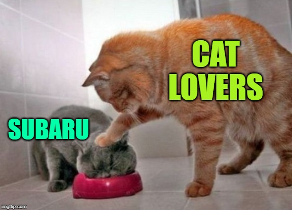 Subaru Love | CAT LOVERS SUBARU | image tagged in force feed cat,subaru,cat lovers,advertising,cats are awesome,funny memes | made w/ Imgflip meme maker