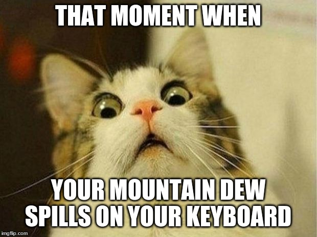Scared Cat | THAT MOMENT WHEN YOUR MOUNTAIN DEW SPILLS ON YOUR KEYBOARD | image tagged in memes,scared cat | made w/ Imgflip meme maker