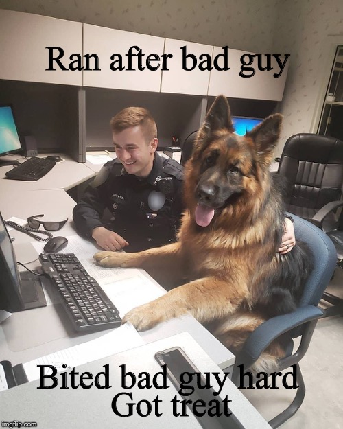 K9 report | Ran after bad guy Got treat Bited bad guy hard | image tagged in k9 report,german shepard,police dog,memes | made w/ Imgflip meme maker