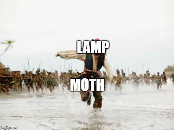 Jack Sparrow Being Chased | LAMP MOTH | image tagged in memes,jack sparrow being chased | made w/ Imgflip meme maker