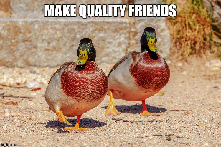 MAKE QUALITY FRIENDS | image tagged in actual advice mallard,good advice mallard | made w/ Imgflip meme maker