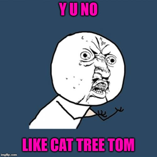 Y U NO LIKE CAT TREE TOM | image tagged in memes,y u no | made w/ Imgflip meme maker