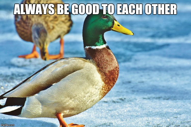 ALWAYS BE GOOD TO EACH OTHER | image tagged in good advice mallard,actual advice mallard | made w/ Imgflip meme maker