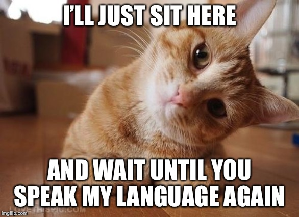Curious Question Cat | I'LL JUST SIT HERE AND WAIT UNTIL YOU SPEAK MY LANGUAGE AGAIN | image tagged in curious question cat | made w/ Imgflip meme maker