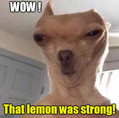 Strong Lemon! | WOW ! That lemon was strong! | image tagged in funny dog,lemons,sour,funny memes | made w/ Imgflip meme maker
