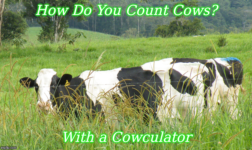 How do you count Cows | How Do You Count Cows? With a Cowculator | image tagged in memes,cows,funny memes,funny cows | made w/ Imgflip meme maker
