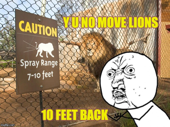 Update to one I did about a year ago | Y U NO MOVE LIONS 10 FEET BACK | image tagged in y u no,lions,san diego,zoo,conspiracy keanu,pee | made w/ Imgflip meme maker