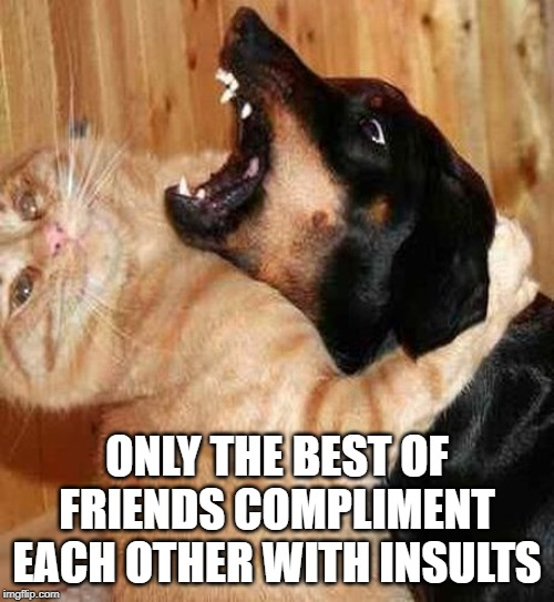 It's when they stop that you know something is wrong |  ONLY THE BEST OF FRIENDS COMPLIMENT EACH OTHER WITH INSULTS | image tagged in cat and dog love,boma,timiddeer,friends,lol | made w/ Imgflip meme maker