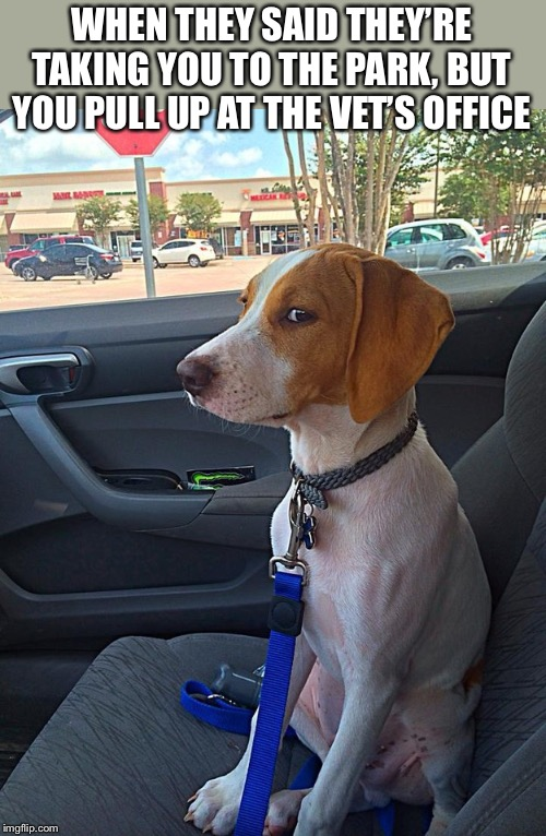 You have lost my trust, human. |  WHEN THEY SAID THEY'RE TAKING YOU TO THE PARK, BUT YOU PULL UP AT THE VET'S OFFICE | image tagged in suspicious dog,memes,funny,trickery,trust issues,dogs | made w/ Imgflip meme maker