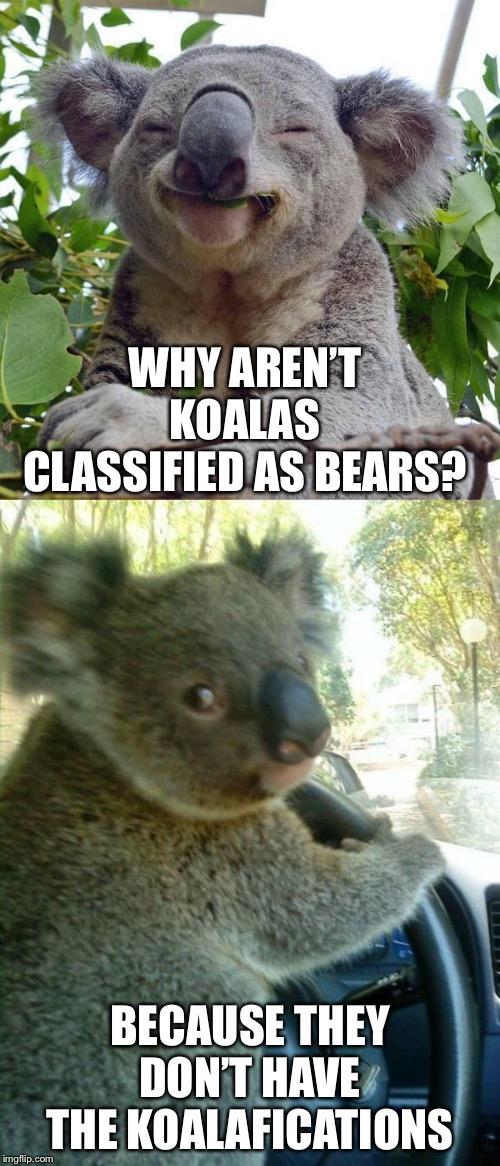 smiling koala Memes & GIFs - Imgflip  Funny Koala Memes