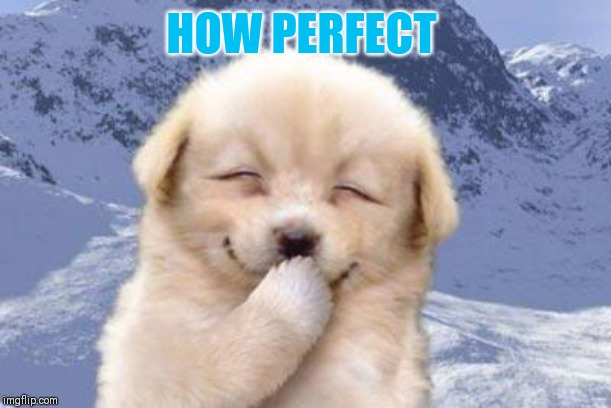 Laughing dog | HOW PERFECT | image tagged in laughing dog | made w/ Imgflip meme maker