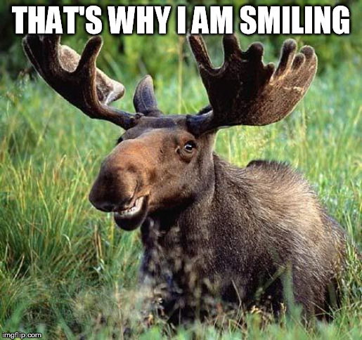 THAT'S WHY I AM SMILING | image tagged in smiling moose | made w/ Imgflip meme maker