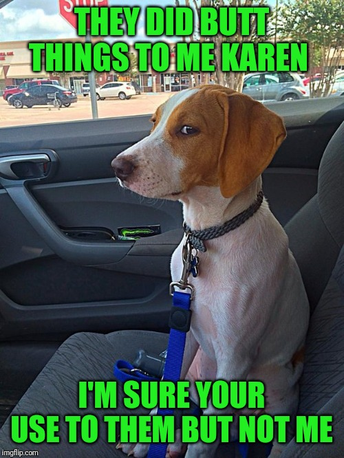 Suspicious Dog |  THEY DID BUTT THINGS TO ME KAREN; I'M SURE YOUR USE TO THEM BUT NOT ME | image tagged in suspicious dog | made w/ Imgflip meme maker