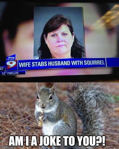 Wife stabs with what?.. |  AM I A JOKE TO YOU?! | image tagged in memes,funny news headlines,squirrel | made w/ Imgflip meme maker