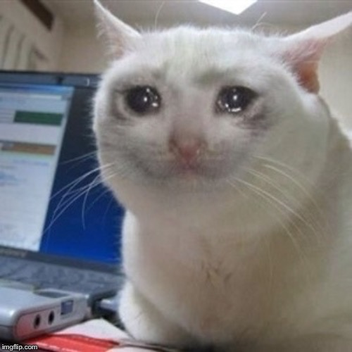 Crying cat | image tagged in crying cat | made w/ Imgflip meme maker